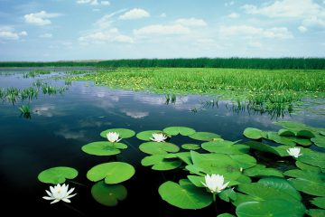Lake Tisza, Hungary
